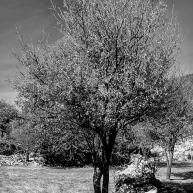 pr2016aaef_26© LEVENT ŞEN